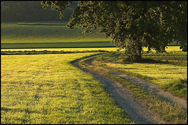 Le chemin, lumiere rasante.