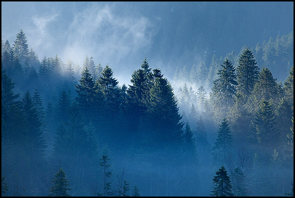 sapins surplombant le lac de lispach la bresse vosges france sapins des vosges photo. Black Bedroom Furniture Sets. Home Design Ideas
