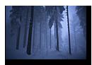 Forêt sous la neige et la brume. Ambiance hivernale.