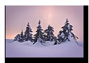 Sapin sous la neige. Champs du feu en Alsace