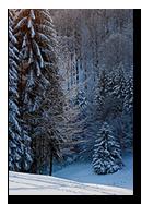 Fôret noire sous la neige, Allemagne