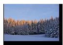 Coucher de soleil sur la cime des sapin en Fôret Noire en Allemagne