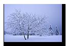 Arbre sous la neige, La Serva, Bas-Rhin, Alsace