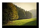 Lueur dorée d'automne sur la route du Hohwald