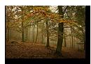 For�t en automne proche de Lichtenberg