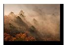 Arbres dans la brume, Vosges, Hohneck, Haut-Rhin, Alsace, France