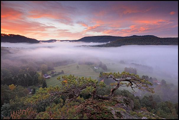 Vall�e de Steinbach dans les Vosges du Nord, Obersteinbach, Bas-Rhin, Alsace, France