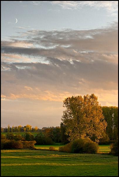 Arbre doré dans le pays de Hanau