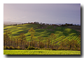 Near Albia, Crete Senesi, Tuscany, Italy, R�gion des Crete, Toscane, Italie