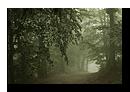Paysages d'Alsace-Vosges - Ambiance forestière
