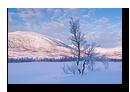 Svanelva, Tranøy, Senja, Troms, Norvège